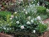 perennial garden shasta daisy - Garden Designs - Decorating Ideas ...