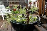 Container Gardening Ideas | Small Space Gardening | HouseLogic