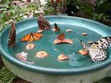 homemade butterfly feeder ehow uk