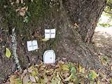 Fairy House Ideas Creative ideas: