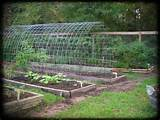 Permaculture Ideas: Space-Smart: Trellis Arch Between Raised Beds