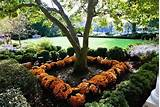for the White House Fall Garden Tour, Chrysanthemums bloom in fall ...