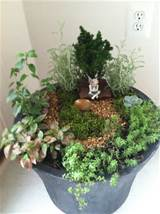 Indoor fairy garden | Gardening ideas | Pinterest