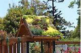Amazing idea! Plant succulents in a wood pallet and secure to the roof ...