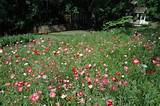 Wildflower cutting gardens | Garden ideas | Pinterest