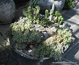 small succulent cactus garden small garden ideas pinterest
