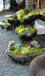 Succulents are great spring plants to grow
