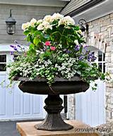 summer urn planter container garden hydrangea lavender rose ivy grey