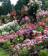 Rose Garden Design Ideas Rose Garden Design Plans