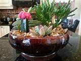 Indoor cactus garden: Gardens Ideas, Cacti Garden, Indoor Cactus ...