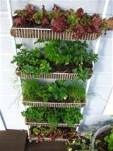 Spice Rack Garden Vertical Vegetable Gardening Idea