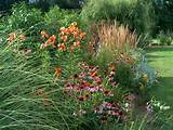 ... perennial border. Love them. This is from my country garden on Garner