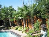 tropical landscape for pool gardens ideas diy ideas backyard ideas