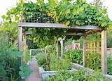Chic Grape Arbor method Seattle Farmhouse Landscape Decorating ideas ...