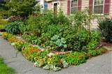 Edible Gardening - An Interview with Ben Barkan from HomeHarvest