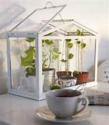 Table top greenhouse, beautiful and cheap decorations or eco gifts for ...