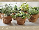 burlap herbs outside pinterest
