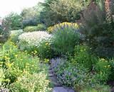 Butterfly Bush method Los Angeles Southwestern Landscape Image Ideas ...