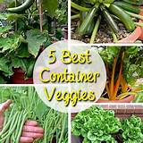 Best Container Vegetables for Beginning Gardeners - Brown Thumb Mama