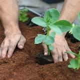 ... Plant Kits › Rocket Gardens › Rocket Gardens Small Constant Garden