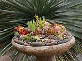 succulent-garden-ideas-2.jpg (600×450) | Garden Ideas | Pinterest
