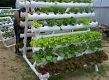 ... > Container Gardening > Greenhouse Container Gardening Ideas