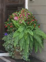 begonias dreams garden garden planters ferns planters garden ideas
