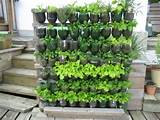 vertical garden soda bottlesgreen houses gardens ideas gardens sodas