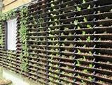 Urban garden ideas | Urban agriculture // Agricultura urbana | Pinter ...