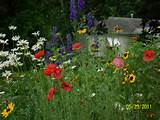 wildflower garden | Ideas for my garden | Pinterest
