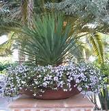 Plants Can, Gardens Ideas, Gardens Outdoor Living, Plants Ideas ...