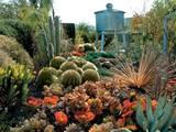 Cactus Garden Takes Shape