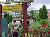 community garden community garden ideas pinterest