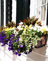 Gardening tips: How to create a window box container garden | New Home ...