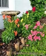 ... Snaps-- snapdragons planted in a semi-shady corner by the birdbath