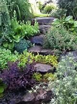 garden succulents garden walkway seattles birrell garden walkways