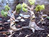 18 Charming Miniature Fairy Garden Decorations - Style Motivation