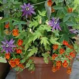 container garden ideas | Garden | Pinterest