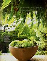 ... Martha Stewart Living magazine, Martha features 1 a nice story on moss