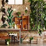 the indoor garden...