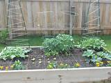 my first square foot garden 2013 vegetable garden ideas pinterest