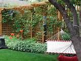 Garden Trellis Ideas | Home Interior Design