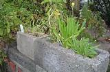 Cinder block gardening | Dream Gardens and Outdoor Ideas | Pinterest