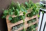 DIY Small Space Pallet Garden in Great Gardening Ideas