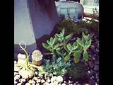 Mini gnome! | Ideas for miniature and fairy gardens | Pinterest