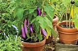 ... gardening | Fruit and vegetable container gardening | garden ideas