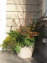 Winter container | Garden Ideas | Pinterest