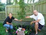 memorial garden ideas google search memory garden pinterest