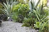 イヴェットさんちの庭。カッコええのう。