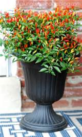 Front Porch Outdoor Decor for Fall {hello, Chili Peppers!} | Making ...
